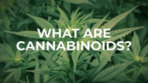What are Cannabinoids Article