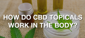 How do CBD Topical Creams work in the body